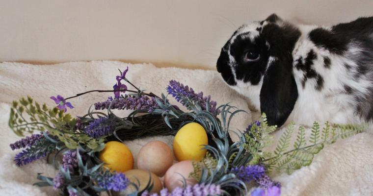 Боядисване на яйца с натурални продукти